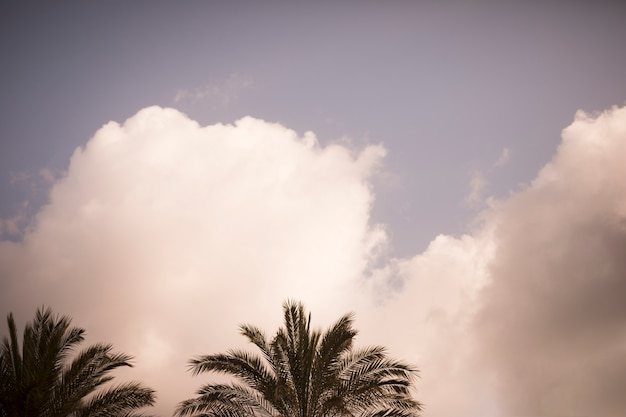 Cocoteros contra el cielo con nubes blancas.