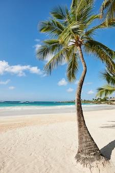 Cocoteros contra el cielo. palm beach en la idílica isla paradisíaca tropical - caribe - república dominicana punta cana