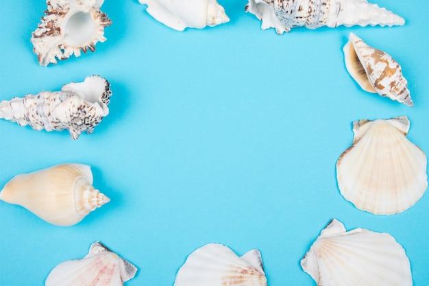 Colección de conchas marinas que forman un marco