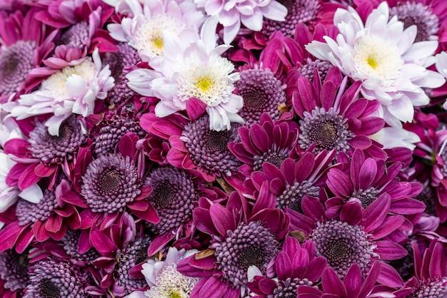 Colección de flores coloridas de primer plano