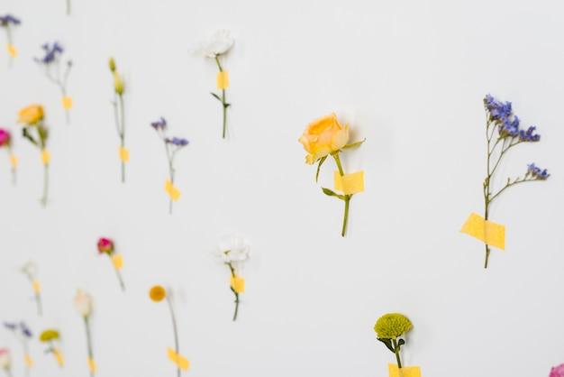 Colección de flores de primavera en flor