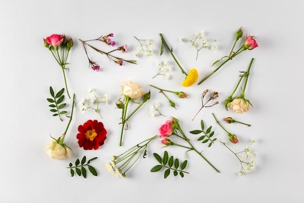 Colección de flores vista superior