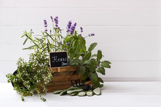 Colección de hierbas frescas