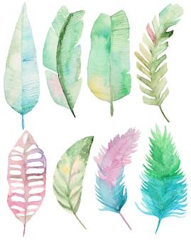 Colección de hojas de palma