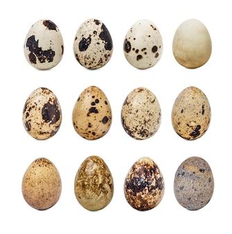 Colección de huevos de codorniz
