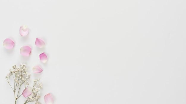 Colección de pétalos de rosa frescos y ramitas de plantas.