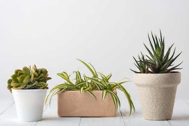 Colección de plantas vivas con espacio de copia