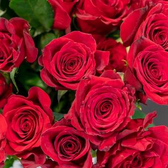 Colección de primer plano de hermosas rosas rojas