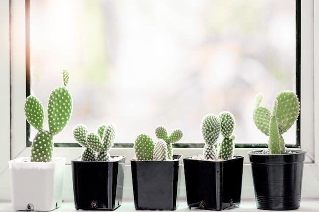 Colección de varios cactus y plantas suculentas en diferentes macetas en el alféizar de la ventana.