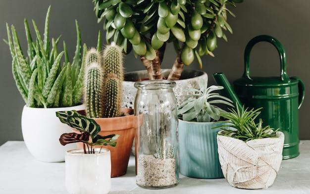 Colección de varios cactus y plantas suculentas en diferentes macetas.