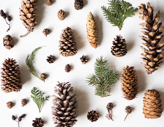 Colección de varios conos coníferos y ramas coníferas en blanco