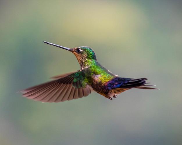 Colibrí volando verde