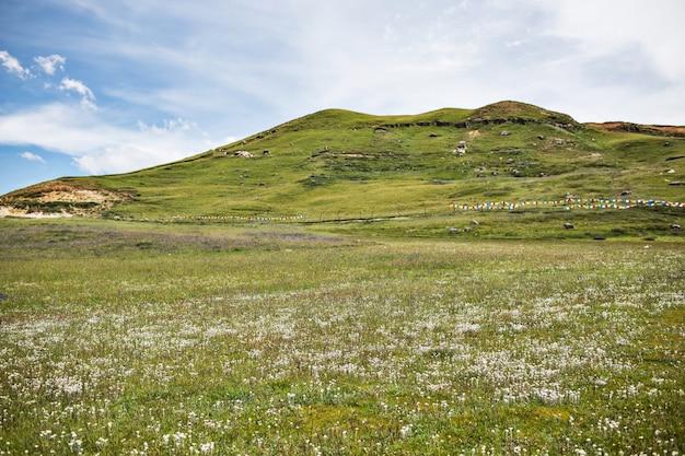 Colina verde con flores blancas