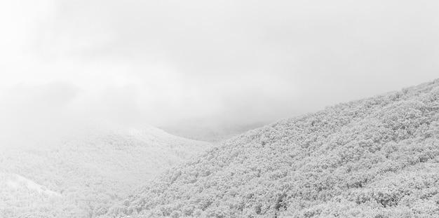 Colinas del bosque en las nubes y la nieve a principios de la mañana de invierno