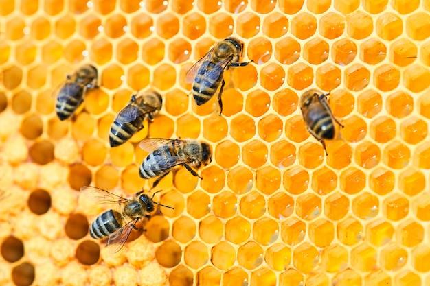 Colmena de abejas en un panal