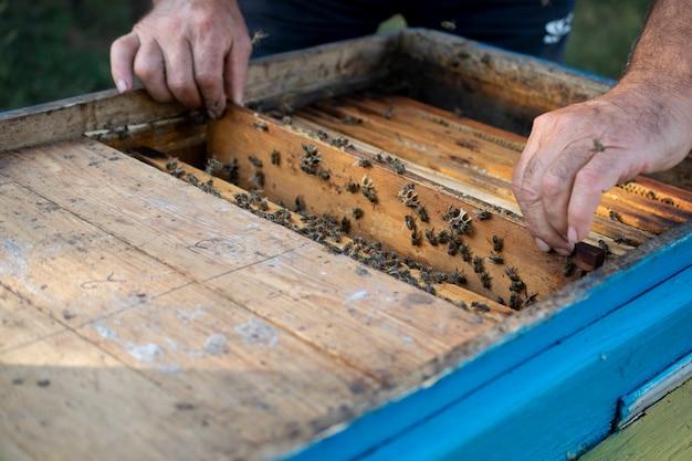 Colmena de madera con abejas, insectos beneficiosos, apicultor