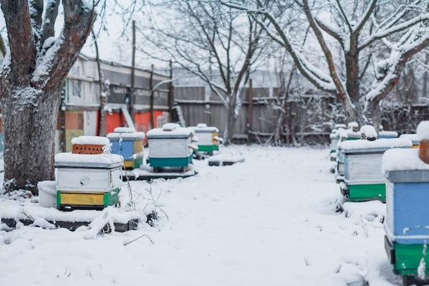 Las colmenas coloridas en el colmenar en invierno se colocan en la nieve entre los árboles cubiertos de nieve.