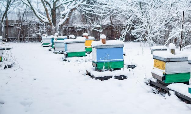 Colmenas en el jardín en invierno