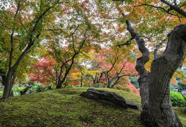 Color de otoño japonés de árboles de arce en el jardín korakuen, okayama, japón