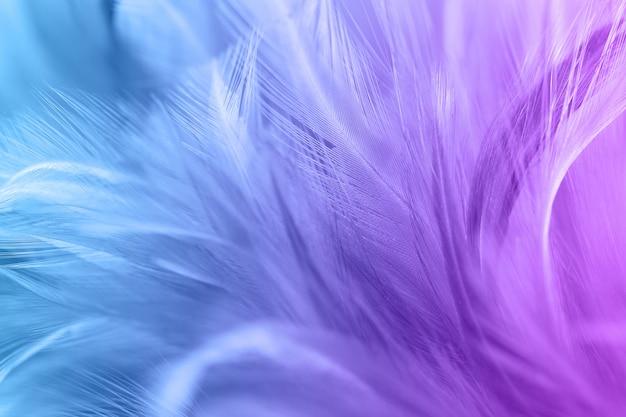 Color pastel de plumas de pollo en un estilo suave y borroso para el fondo