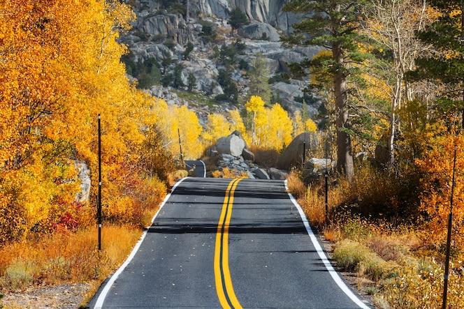 Colorida escena de otoño en la carretera del campo en el bosque