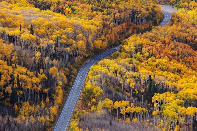 Colorida escena de otoño en la carretera del campo en la mañana soleada