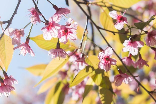 Colorida flor rosa en un árbol