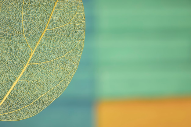 Colorida hoja de otoño con espacio de copia