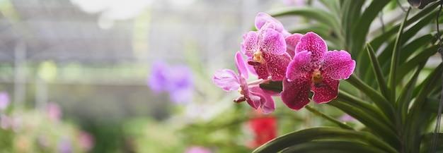 La colorida industria agrícola de orquídeas en tailandia