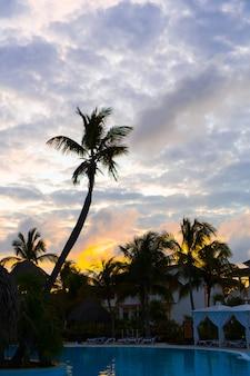 Colorida puesta de sol sobre la playa del mar con silueta de palmera