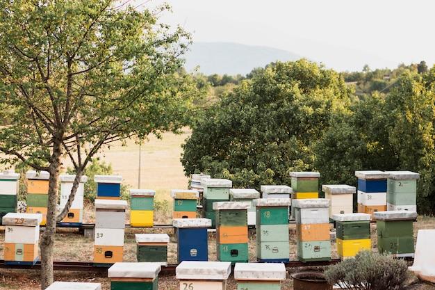 Coloridas colmenas de abejas con árboles verdes