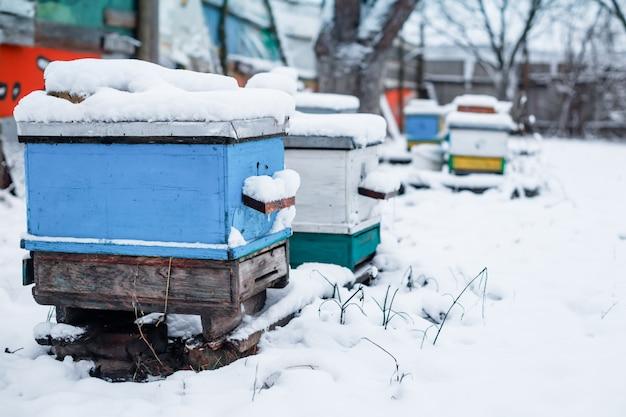 Coloridas colmenas en colmenar en invierno