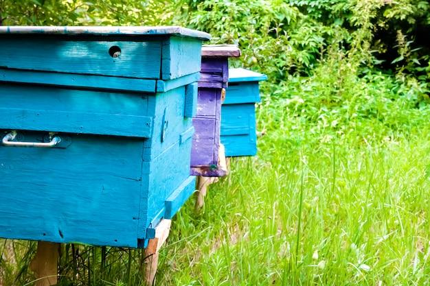 Coloridas colmenas en colmenar en un jardín de verano