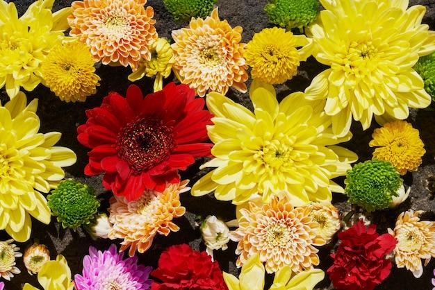 Coloridas flores otoñales.