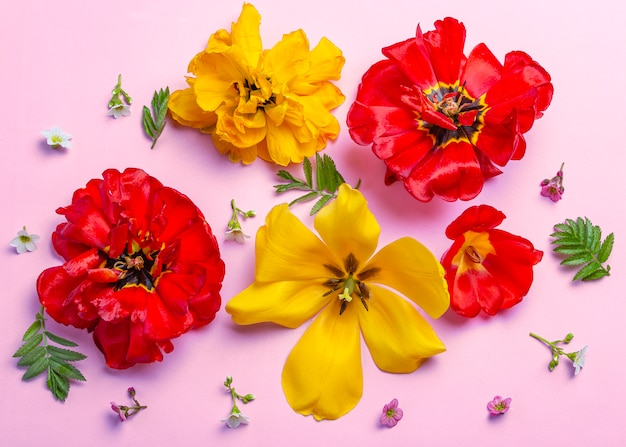 Coloridas flores de primavera verano mezcla sobre fondo rosa.