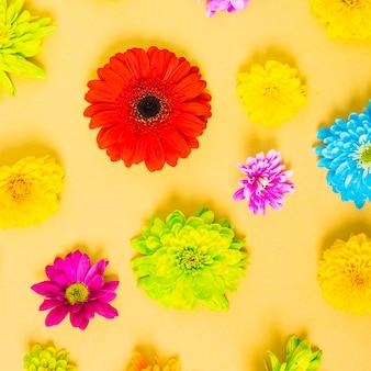 Coloridas flores sobre fondo amarillo