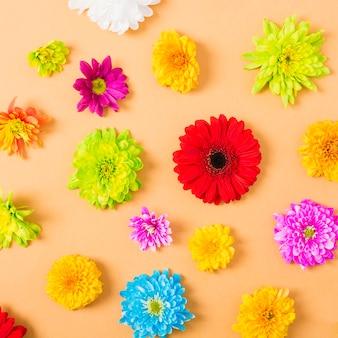 Coloridas flores sobre un fondo naranja
