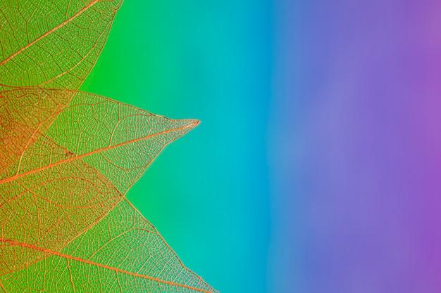 Coloridas hojas de otoño con espacio de copia