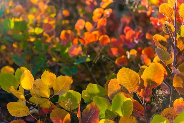 Coloridas hojas de otoño rojas y verdes amarillas