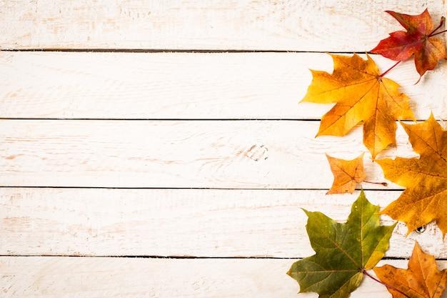 Coloridas hojas de otoño sobre fondo blanco rústico.