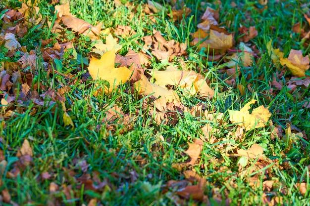 Coloridas hojas de otoño sobre la hierba verde en un parque
