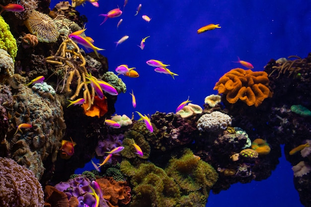 Colorido arrecife de coral con peces tropicales
