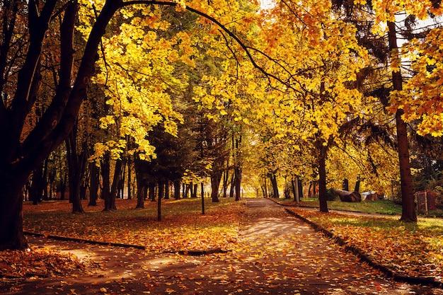 Colorido follaje en el parque otoño
