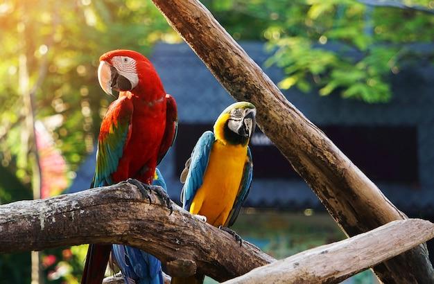 Colorido pájaro guacamayo en rama de árbol.