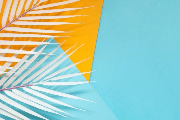 Coloridos cartones geométricos con hojas de palmera blanca