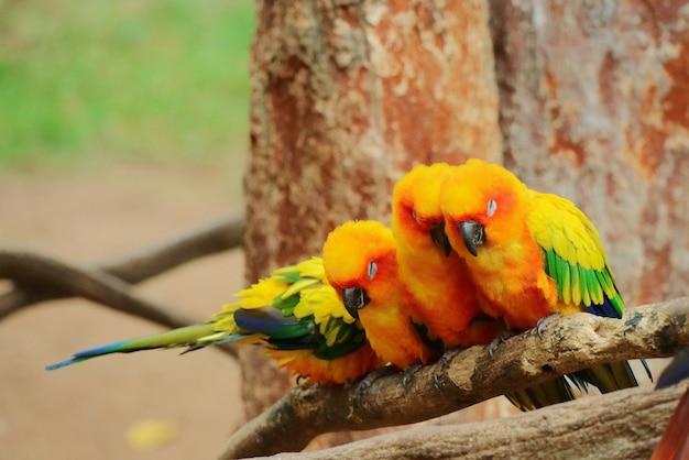 Coloridos loros sentados y durmiendo en una rama de un gran árbol
