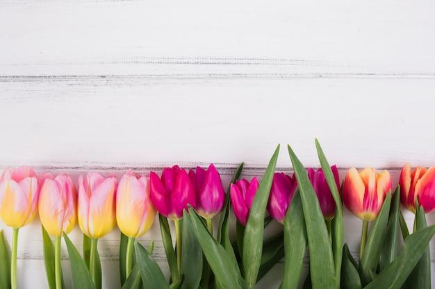 Coloridos tulipanes en fila