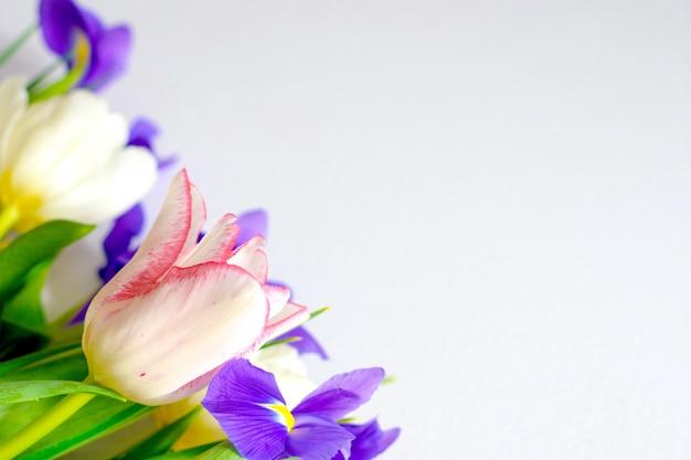 Coloridos tulipanes de primavera y flores de iris sobre fondo blanco.