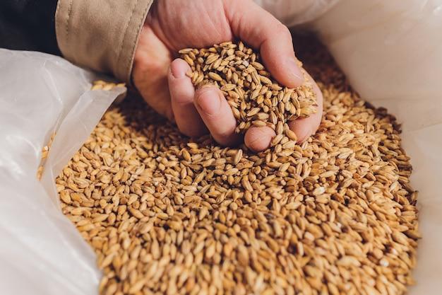 Colse de la mano de un agricultor con semillas de soja. un producto orgánico saludable.
