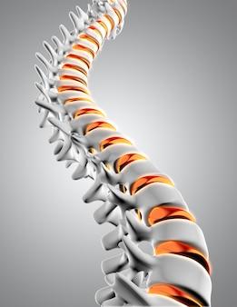 Columna vertebral 3d